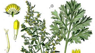 Иллюстрация из пособия по ботанике XIX века