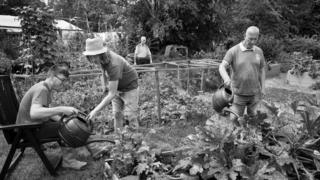Volunteers in action at Windmill Hill City Farm