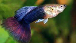 لماذا لا تستحق الأسماك أن توصم بضعف الذاكرة؟