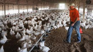 US poultry farmer