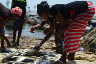 Women choose the fish they want to take to market