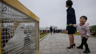 A child looks at a box of doves used for wedding photo shoots at a park in Pyongyang on April 18, 2019