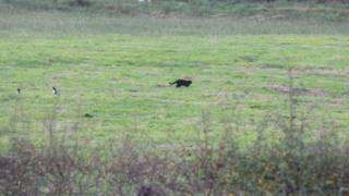 Black cat in east Ayrshire