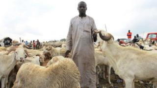 A vendor pose for photo as he displayed rams for sale at a cattle market in Kara Isheri in the state Ogun State, southwest Nigeria, ahead of Muslim festival of Eid al-Adha on July 29, 2020. Nigeria President, Muhammadu Buhari on Wednesday imposed tight movement restrictions across the country in order to stop the spread of COVID-19 coronavirus disease, he will be observe this years Eid-el-Kabir prayers with his family members within the Presidential Villa, Abuja. Before the COVID-19 pandemic, Buhari usually joins Muslims for Eid prayers in any of the prayer grounds in Abuja whenever he does not travel to his home town, Daura in Katsina State for the festivals. He also advised Where small groups choose to hold the Eid together, face masks are absolutely necessary, as is social distancing. Advisedly, such prayers should hold outdoors and worshippers are encouraged to bring their own prayer mats.