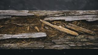 A close-up photograph of a rotten timber beam at Dunston Staiths