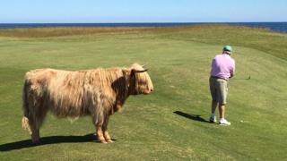 Golfing at Brora