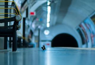 فأران يتشاجران في محطة لمترو أنفاق لندن