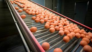 Eggs roll down an assembly line in a factory in Belgium