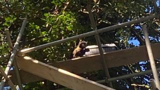 sports Cat on scaffolding in tree