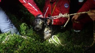 The dog after being rescued