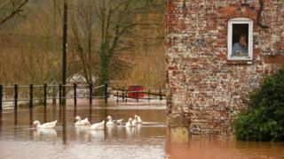 A woman looks out of her window as ducks swim past in floodwater after the River Severn bursts its banks in Bewdley, west of Birmingham.