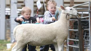 Patrick Dodsworth, aged two, and four-year-old brother Freddie, from Cumbria, with their North County Cheviot sheep