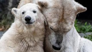 #شما؛ دوستی یا دشمنی با حیوانات؟
