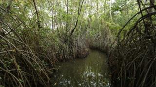 Mangroves, Sri Lanka (Image: Seacology)