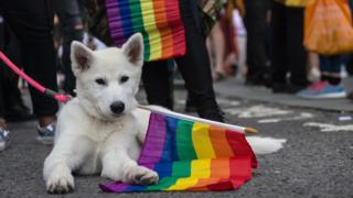 Dog-carrying-Pride-flag.