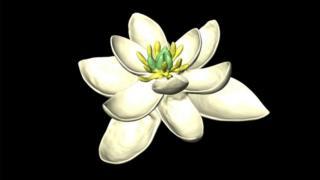 flor ancestral