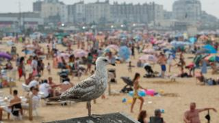 A seagull is pictured as people enjoy the hot weather on Margate beach