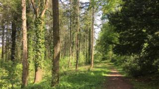Eggesham Forest