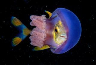 Un pez atascado en una medusa.