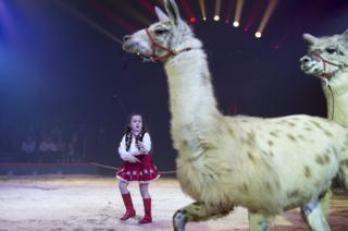 Swiss artist Chanel Marie Knie with her llamas during her performance.