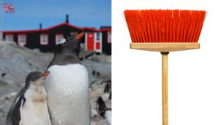 Penguins and a broom