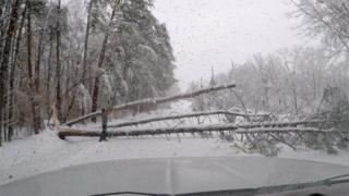 A fallen tree blocks the road in South Carolina