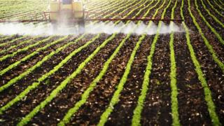Veículo grande solta spray de pesticidas em plantação