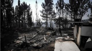 Обгорілий ліс після пожежі