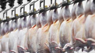 Chickens in an abattoir