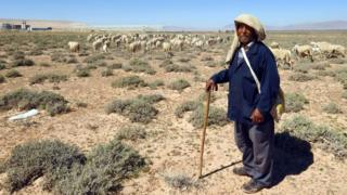 Salem, a 45-year-old Tunisian shepard, leads his flock in the town of Mdhila, south of Gafsa, one of the main mining sites in central Tunisia. work has resumed after a month-long strike. on March 9, 2018.