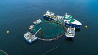 Norway fish farm