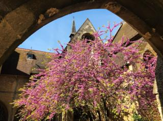 A blossoming tree in Ripon College grounds in Cuddesdon