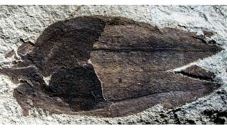 Fóssil do fruto