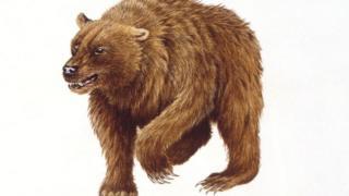 برداشت هنرمند از ظاهر خرس غار
