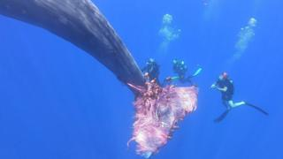 in_pictures Italian coastguard divers work to free a sperm whale caught in a fishing net