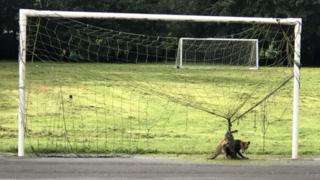 Fox stuck in netting