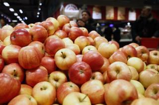 新疆野蘋果被認為是栽培蘋果的始祖(資料照片)。