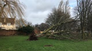 A tree has fallen down in College Road in the Llandaff area of Cardiff