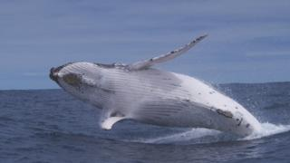 science whale breaching