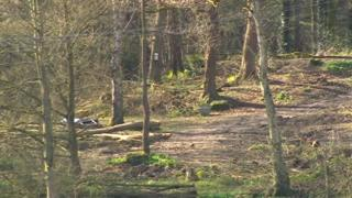 Trees felled at Haytop Country Park