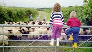 children-watching-sheep.