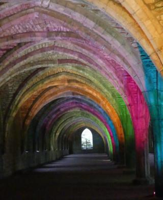Colourful lights on a cellarium
