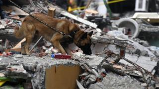 A sniffer dog takes part in the search for survivors in Mexico City on September 21, 2017