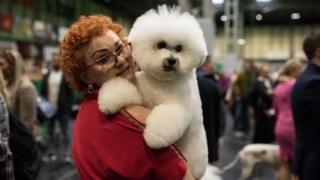 Хозяйка с собакой породы бишон фризе