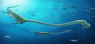 พบฟอสซิลตัวอ่อนในครรภ์ของ Dinocephalosaurus สัตว์เลื้อยคลานทะเลคอยาว