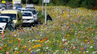 Rotherham's river of flowers