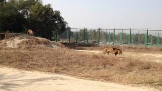 'Lahore Safari'