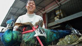 Un vendedor vende tres pavos reales en un mercado de animales salvajes en Guangzhou, China