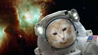 Котик у скафандрі в космосі