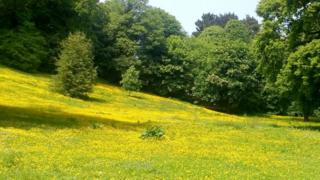 The meadow before it was mowed by